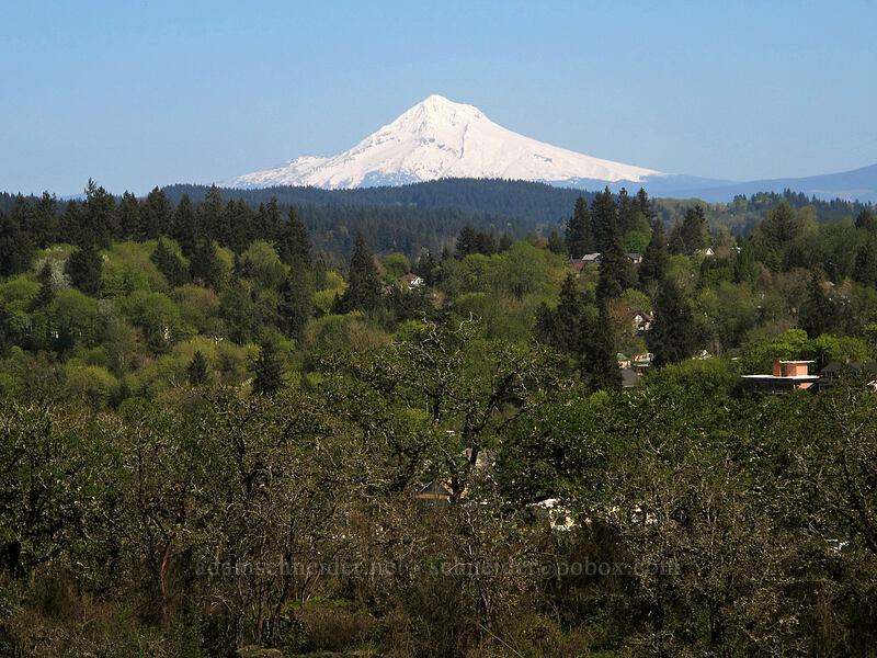 Mount Hood [Camassia Natural Area, West Linn, Oregon]