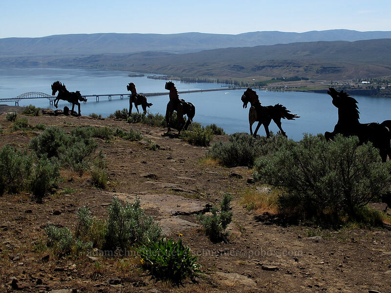 Grandfather Cuts Loose the Ponies [Wild Horse Monument, Grant County, Washington]