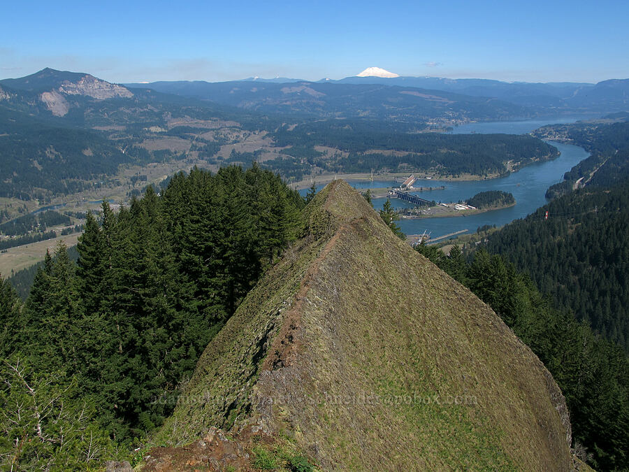 Bonneville Dam & Mt. Adams [Munra Point, Columbia River Gorge, Oregon]
