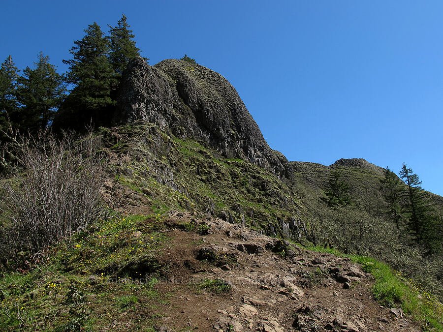 looking up toward Munra Point [Munra Point Trail, Columbia River Gorge, Oregon]