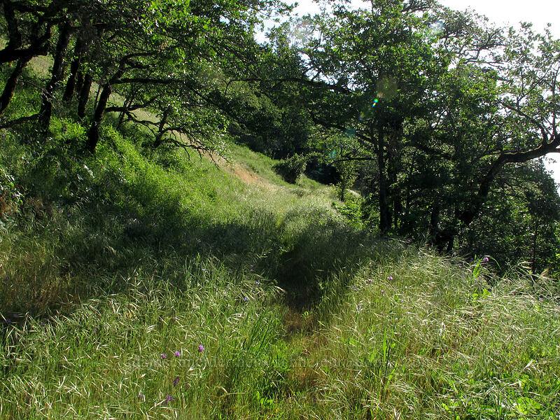 oak meadow [Cook Hill, Skamania County, Washington]