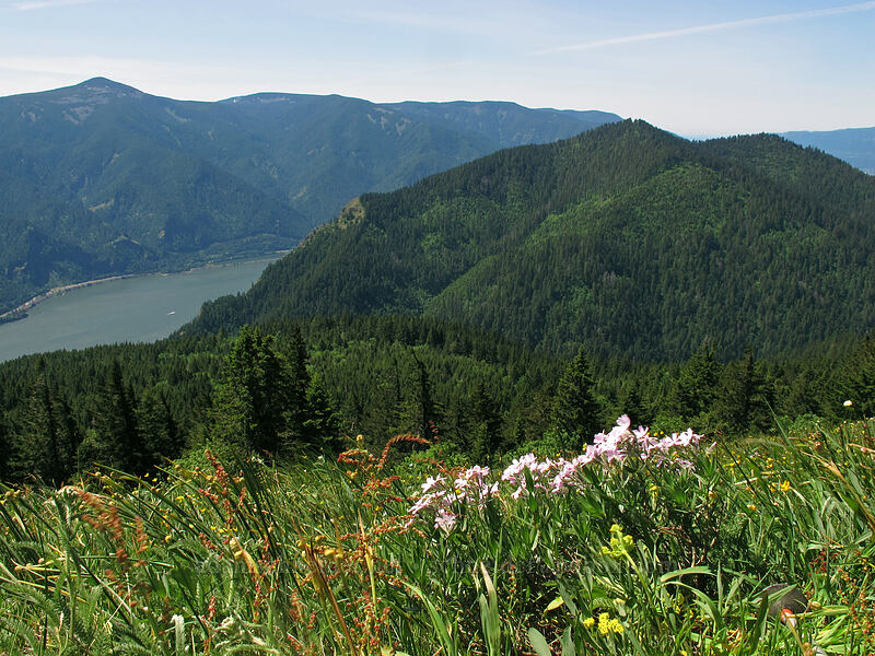 Mt. Defiance & Dog Mountain [Cook Hill, Skamania County, Washington]