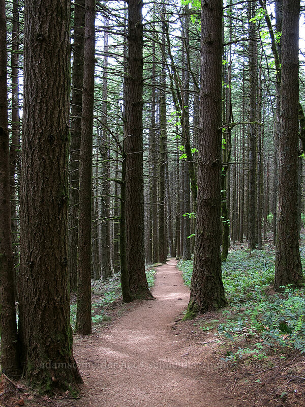the trail [Dog Mountain Trail, Skamania County, Washington]