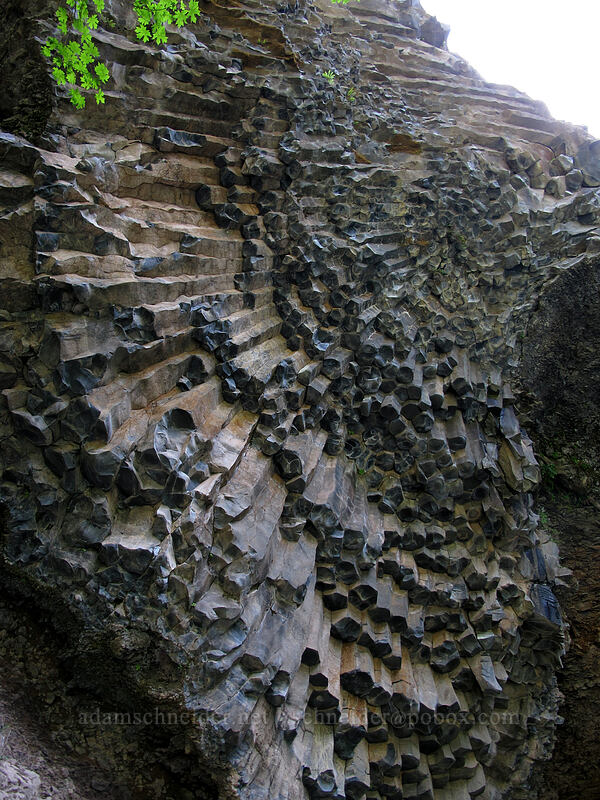 columnar basalt [Toketee Falls Trail, Umpqua National Forest, Oregon]