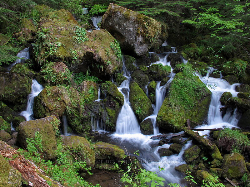 Watson Creek [Watson Falls Trail, Umpqua National Forest, Oregon]