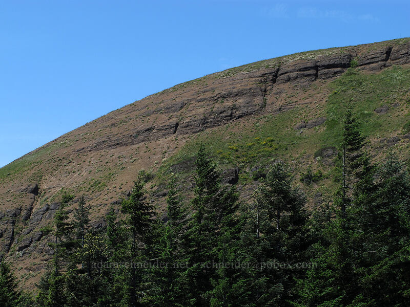 Grassy Knoll [Grassy Knoll Trail, Gifford Pinchot National Forest, Washington]
