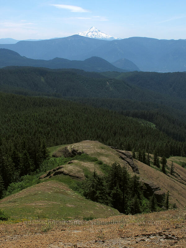 Grassy Knoll's south ridge & Mt. Hood [Grassy Knoll, Gifford Pinchot National Forest, Washington]