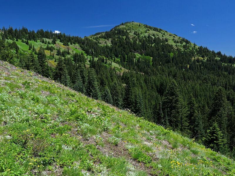 South Peak [Cone Peak Trail, Willamette National Forest, Oregon]