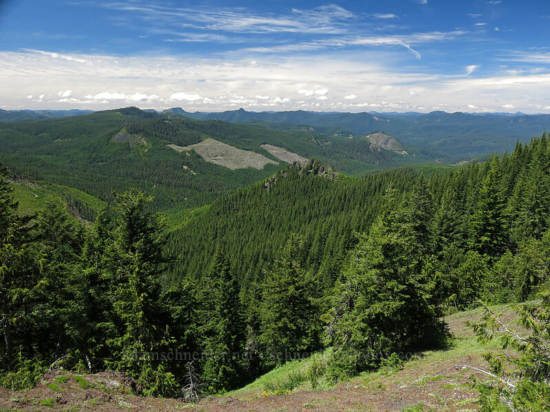 view to the north [Cone Peak Trail, Willamette National Forest, Oregon]