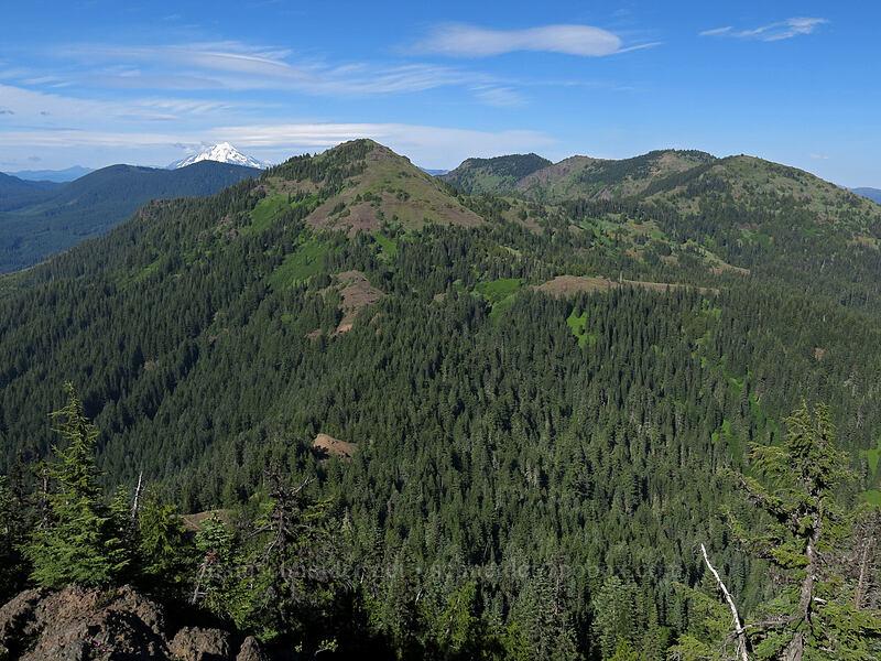 Cone Peak, North Peak, Echo Mountain, South Peak, & Mt. Jefferson [Iron Mountain summit, Willamette National Forest, Oregon]
