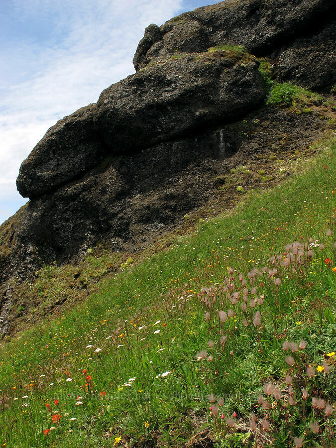 wildflowers & cliffs [Saddle Mountain Trail, Clatsop County, Oregon]