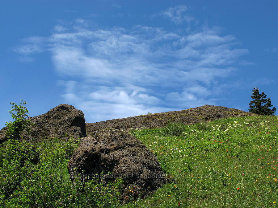 wildflowers & clouds [Saddle Mountain Trail, Clatsop County, Oregon]