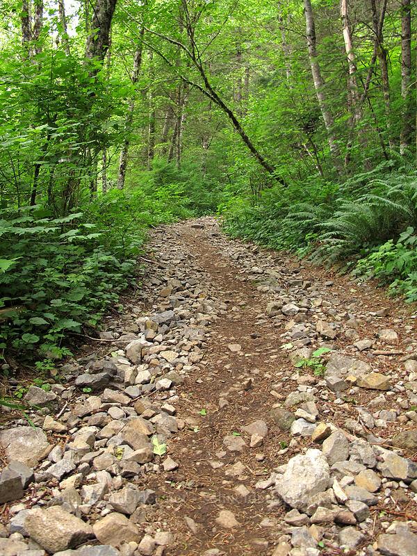 rocky trail [L-1200 Road, Gifford Pinchot National Forest, Washington]