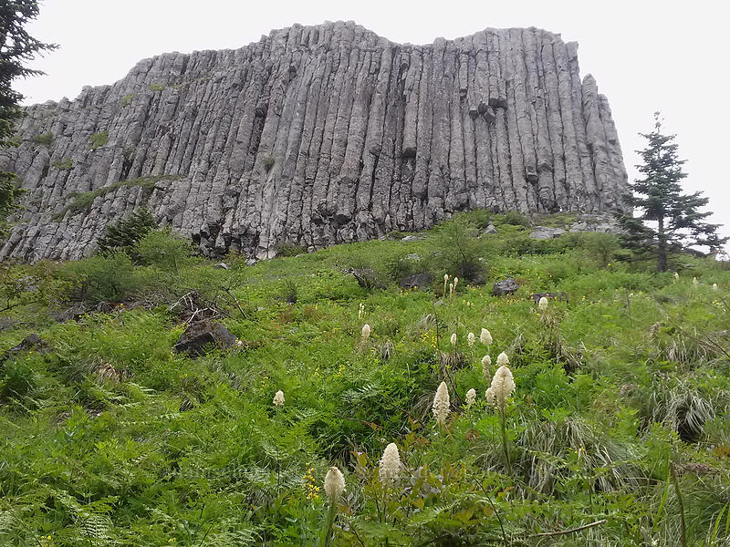 columnar basalt on Sturgeon Rock [Sturgeon Rock Trail, Gifford Pinchot National Forest, Washington]