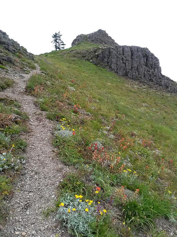 wildflowers (Eriophyllum lanatum, Castilleja sp.) [Sturgeon Rock, Gifford Pinchot National Forest, Washington]