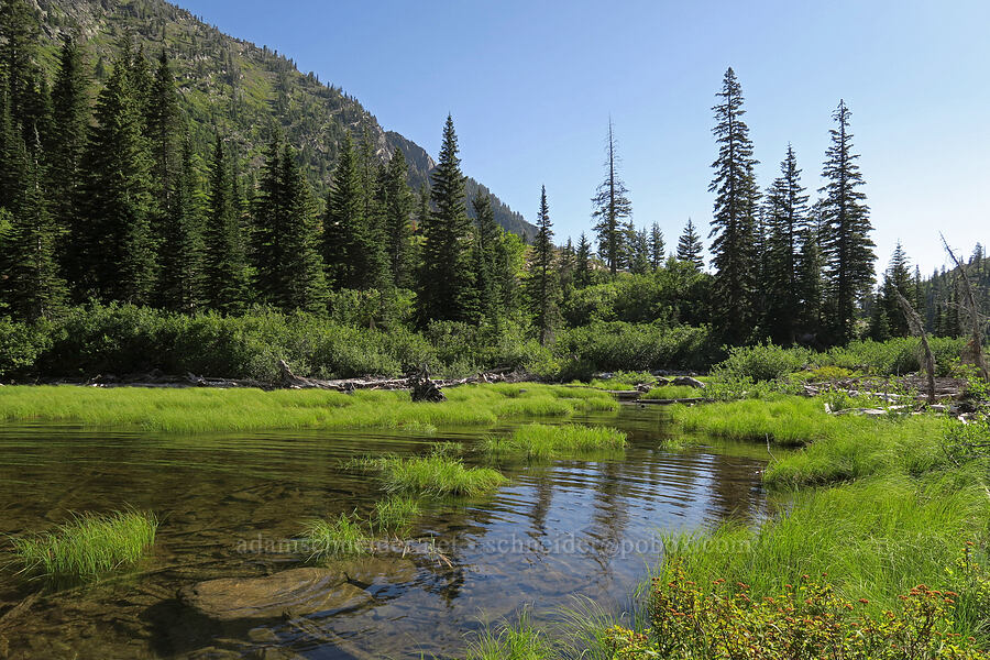 wetlands [Leigh Lake Trail, Cabinet Mountains Wilderness, Montana]
