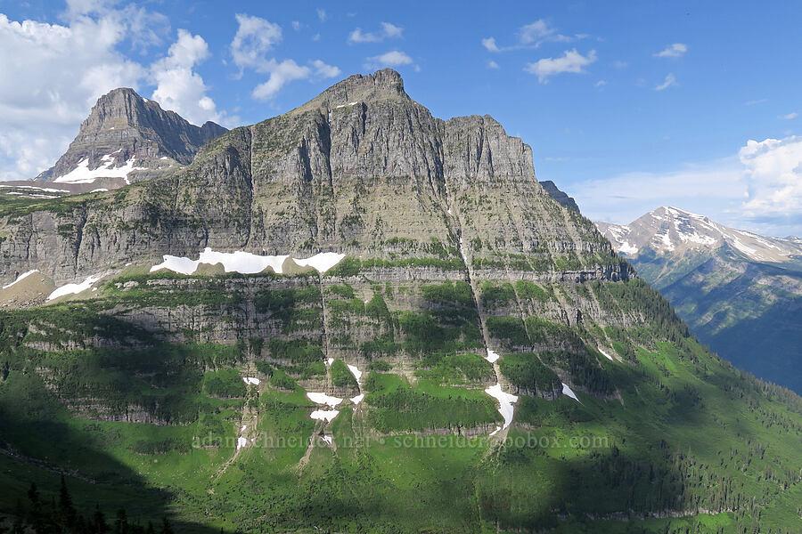 Clements Mountain & Mt. Oberlin [Highline Trail, Glacier National Park, Montana]