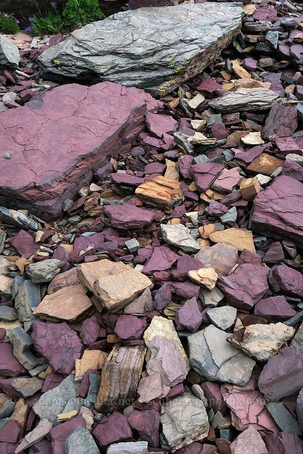 colorful rocks [Garden Wall, Glacier National Park, Montana]
