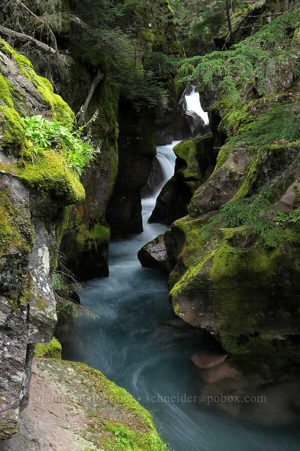 Avalanche Gorge [Trail of the Cedars, Glacier National Park, Montana]