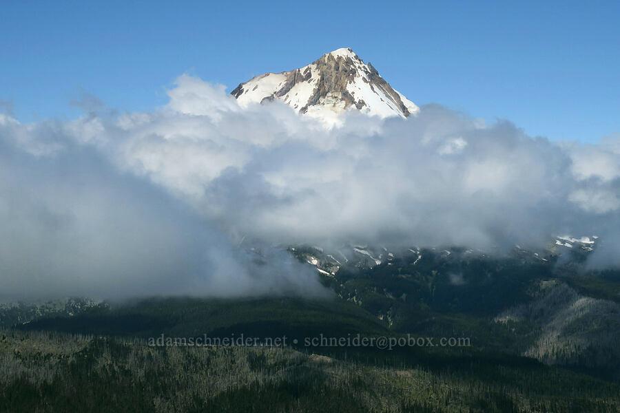 Mount Hood & low clouds [Lookout Mountain Trail, Badger Creek Wilderness, Oregon]