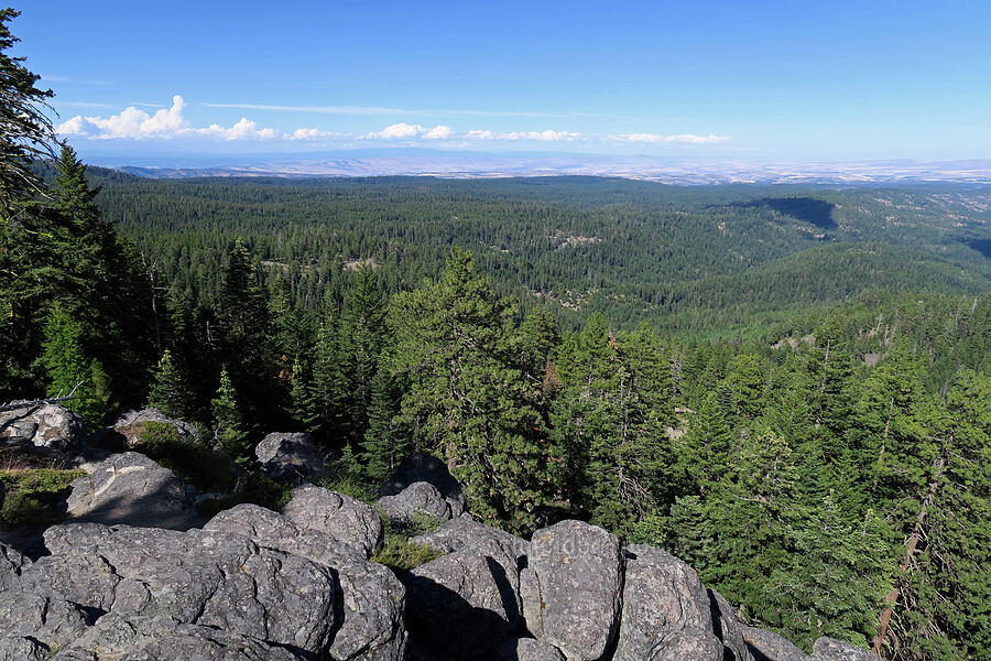 view to the northeast [Bulo Point, Mt. Hood National Forest, Oregon]