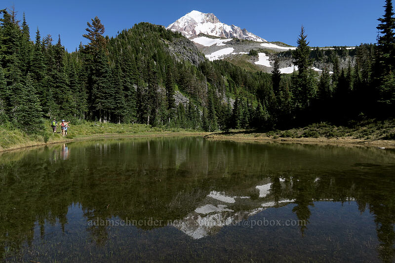 pond below McNeil Point [Timberline Trail, Mt. Hood Wilderness, Oregon]