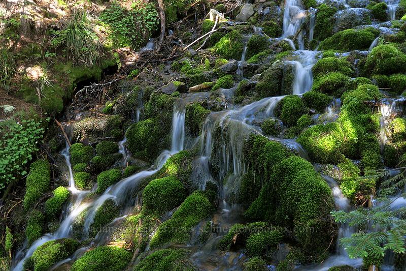 trailside cascade [Timberline Trail, Mt. Hood Wilderness, Oregon]