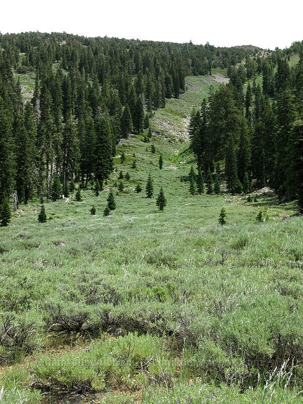 sagebrush hillside (Artemisia tridentata) [Deadfall Meadows, Shasta-Trinity National Forest, California]
