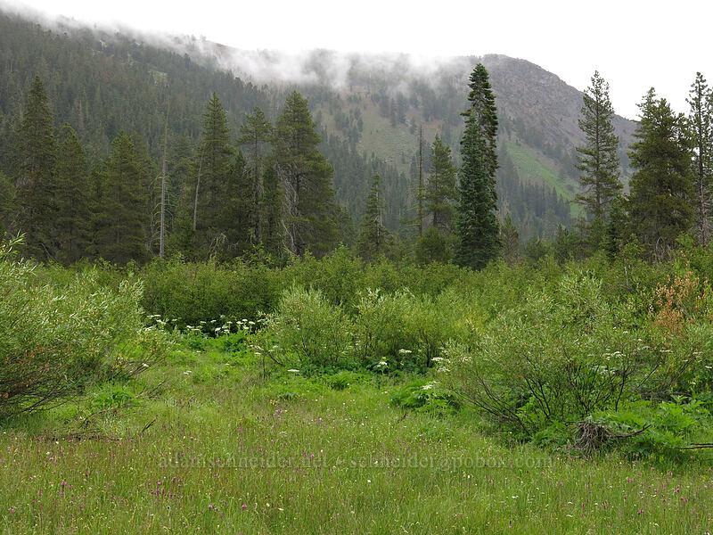 Deadfall Meadows [Deadfall Meadows, Shasta-Trinity National Forest, California]