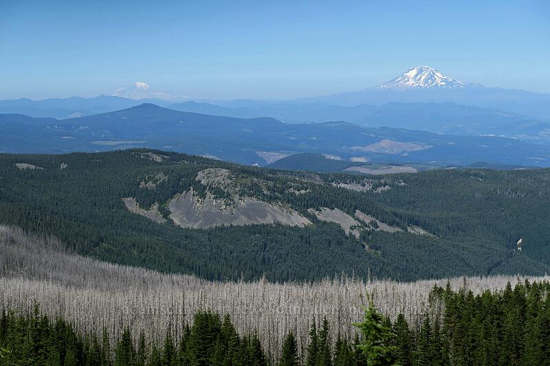 Mt. Rainier & Mt. Adams [Vista Ridge Trail, Mt. Hood Wilderness, Oregon]