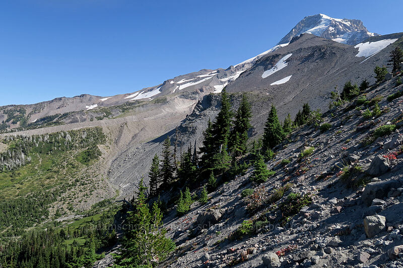 Elk Cove, Mt. Hood, & Barrett Spur [Elk Cove, Mt. Hood Wilderness, Oregon]