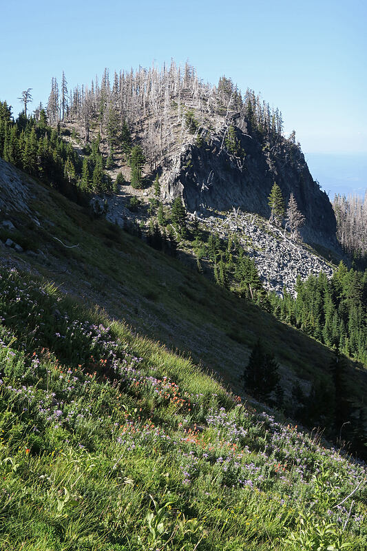 cliffs above Elk Cove [Elk Cove, Mt. Hood Wilderness, Oregon]