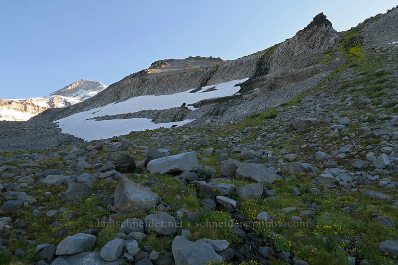 cliffs, snowfields, & wildflowers [Elk Cove, Mt. Hood Wilderness, Oregon]