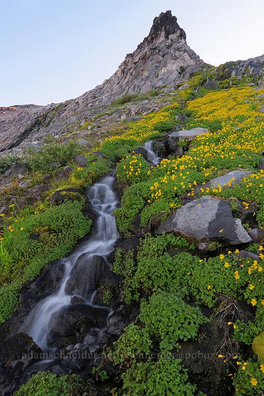 monkeyflower, rocks, & water (Erythranthe tilingii (Mimulus tilingii)) [Elk Cove, Mt. Hood Wilderness, Oregon]
