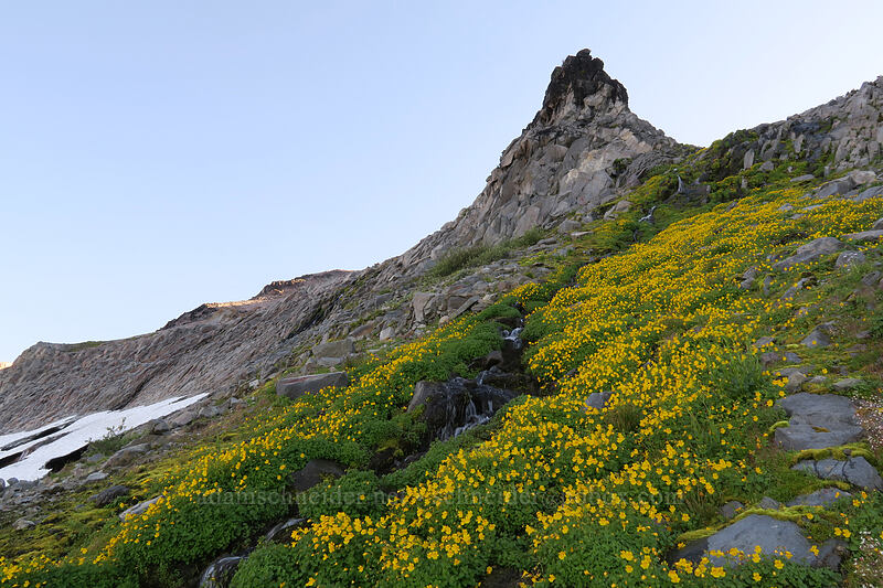 monkeyflower & a pinnacle (Erythranthe tilingii (Mimulus tilingii)) [Elk Cove, Mt. Hood Wilderness, Oregon]