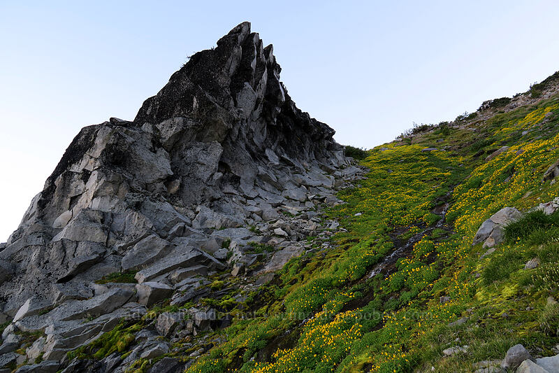 monkeyflower & broken rock (Erythranthe tilingii (Mimulus tilingii)) [Elk Cove, Mt. Hood Wilderness, Oregon]
