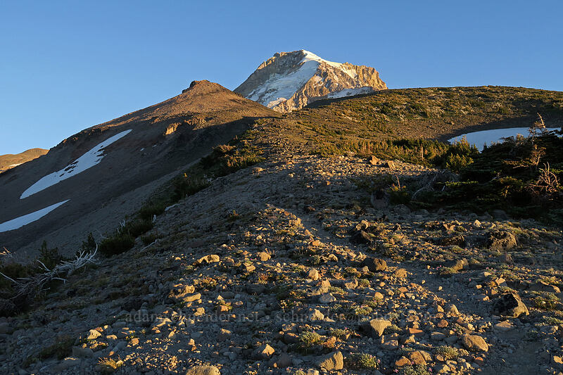 Barrett Spur & Mt. Hood [above Elk Cove, Mt. Hood Wilderness, Oregon]