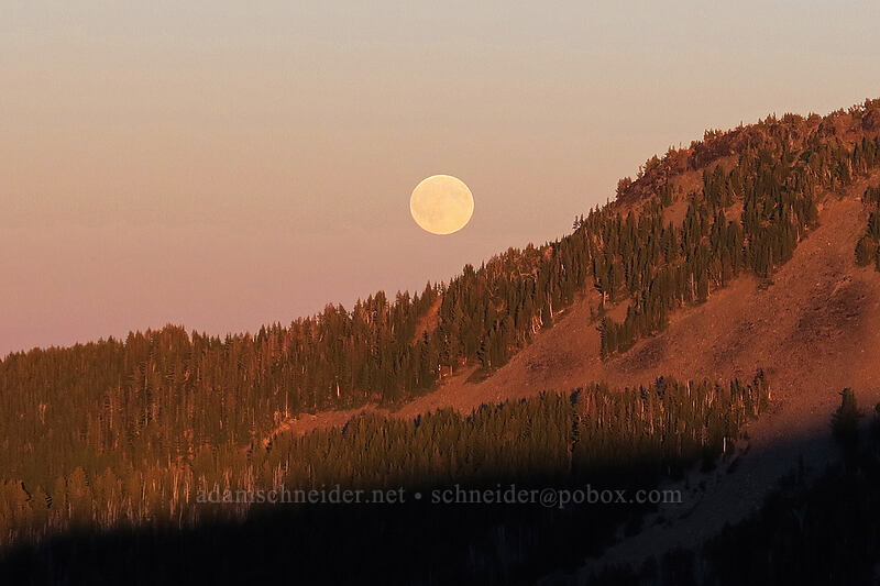 moonrise [above Elk Cove, Mt. Hood Wilderness, Oregon]