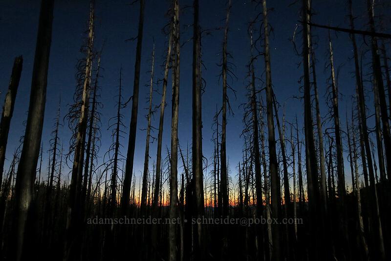 moonlight on burnt trees [Vista Ridge Trail, Mt. Hood Wilderness, Oregon]
