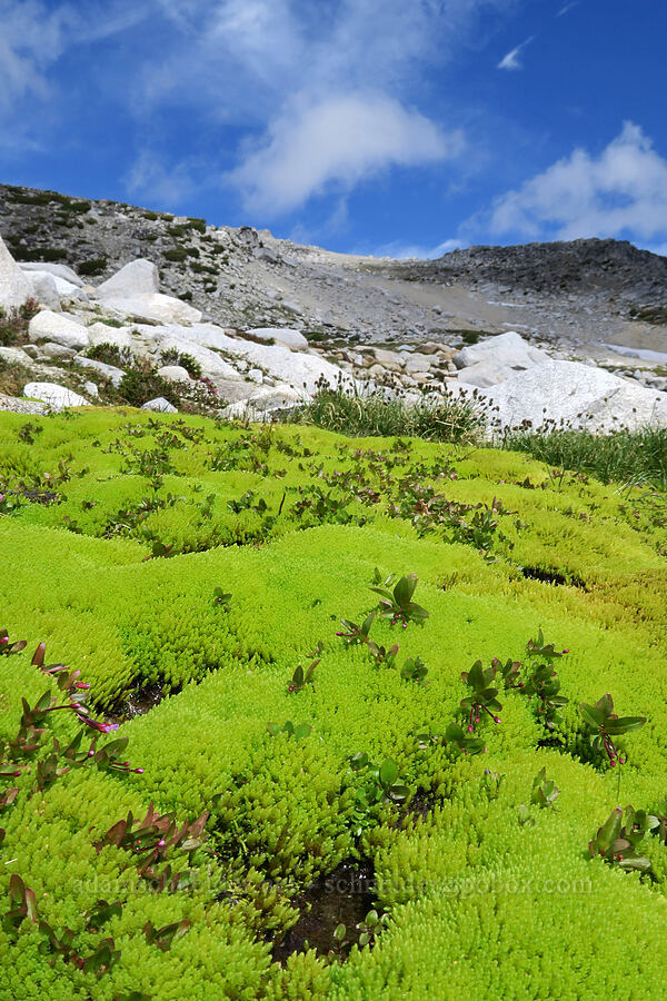 moss & mountains [Snow Lakes Trail, Alpine Lakes Wilderness, Washington]