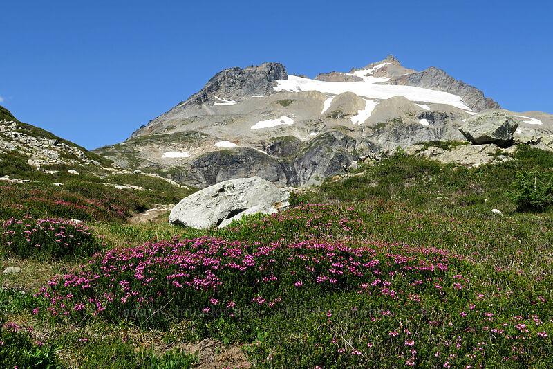pink mountain heather & Sahale Mountain (Phyllodoce empetriformis) [Sahale Arm Trail, North Cascades National Park, Washington]