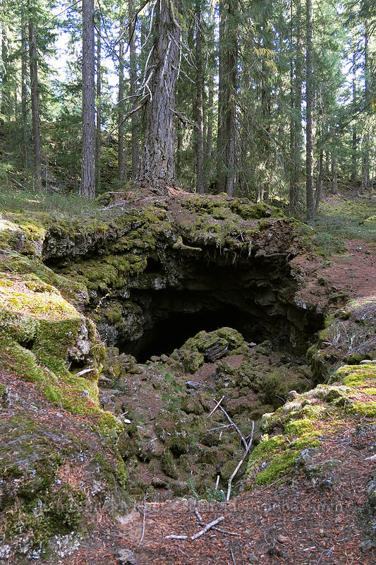 lava cave [Sawyer's Caves, Willamette National Forest, Oregon]