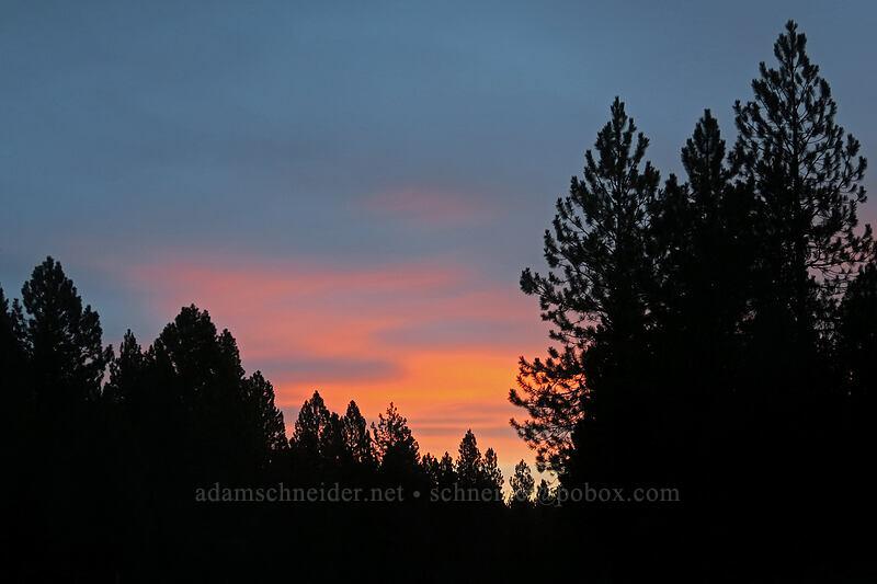 sunrise [Cascade Lakes Highway, Deschutes National Forest, Oregon]