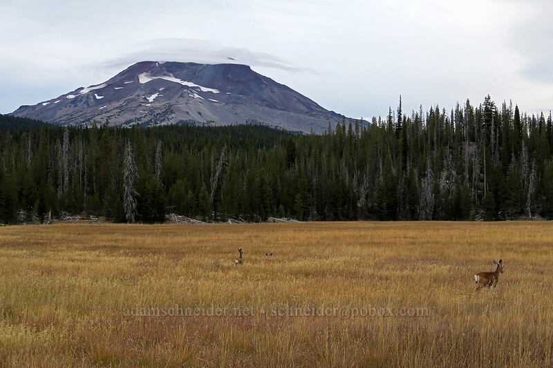 South Sister & black-tailed deer (Odocoileus hemionus columbianus) [Green Lakes Trailhead, Deschutes National Forest, Oregon]