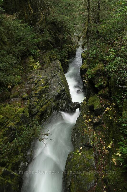 gorge above Opal Pool [Kopetski Trail, Opal Creek Scenic Recreation Area, Oregon]