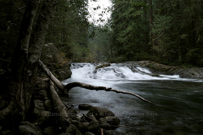 Little North Santiam River [Forest Road 2209, Opal Creek Scenic Recreation Area, Oregon]