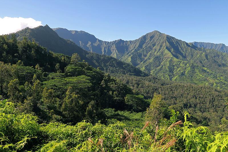 Hihimanu, Namolokama, & Mamalahoa ['Okolehao Trail, Hanalei, Kaua'i, Hawaii]