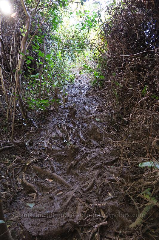muddy trail ['Okolehao Trail, Hanalei, Kaua'i, Hawaii]
