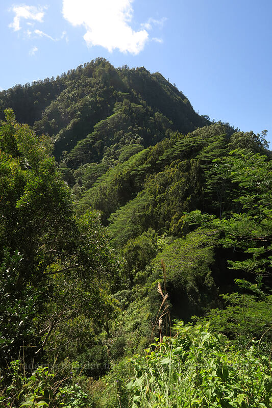 the ridge to Hihimanu [Hihimanu Trail, Hanalei, Kaua'i, Hawaii]