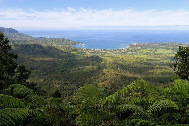 Hanalei Bay [Hihimanu Trail, Hanalei, Kaua'i, Hawaii]
